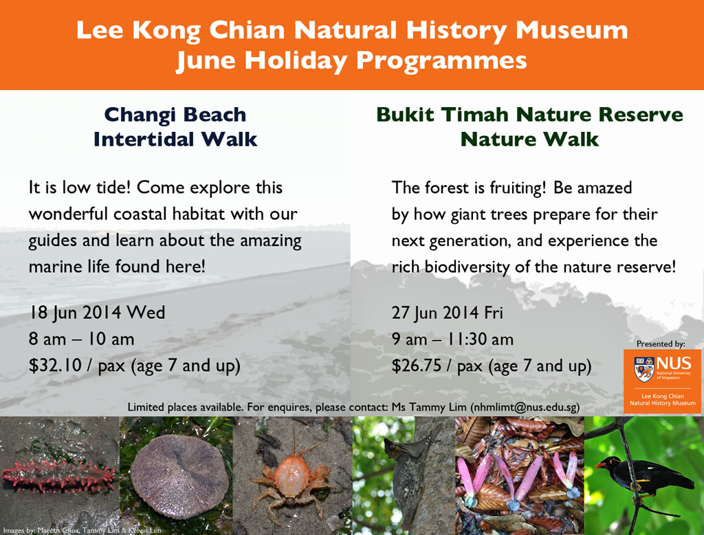 lee kong chian natural history museum guided tour