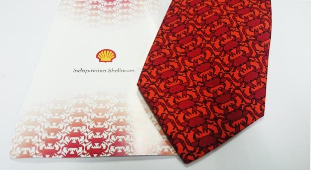indopinnixa shellorum tie