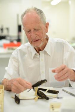 Earl examining swiftlets