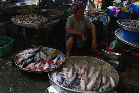 Basa fish vietnam market